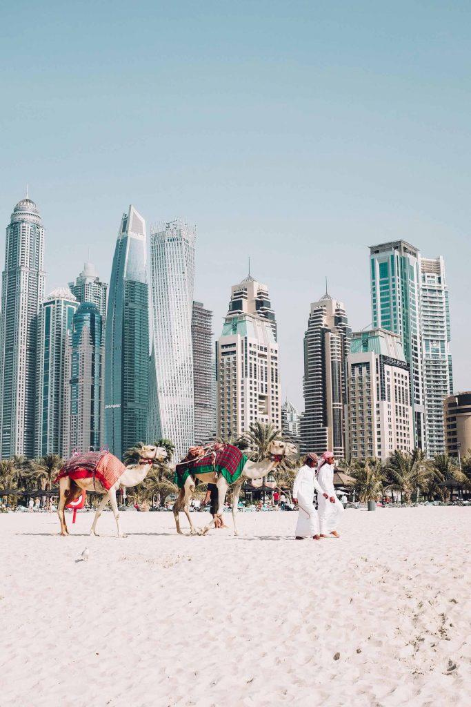 Camellos en las playas de Dubai