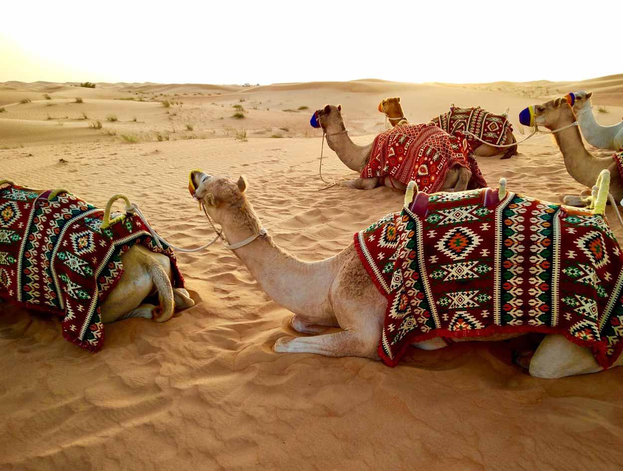 Experiencia Desert Safari Dubai