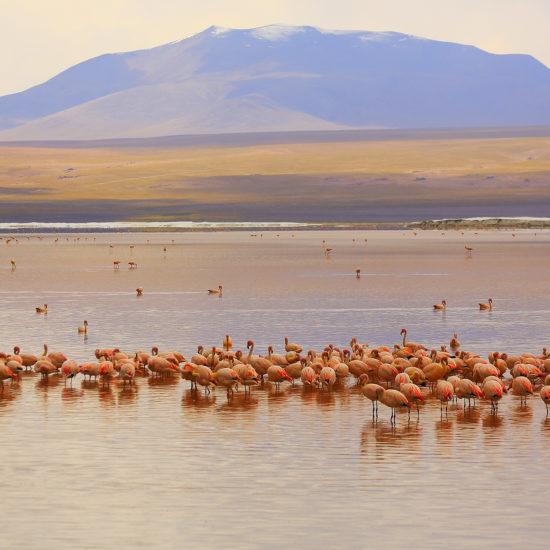 Chile-Atacama-Flamingos de James