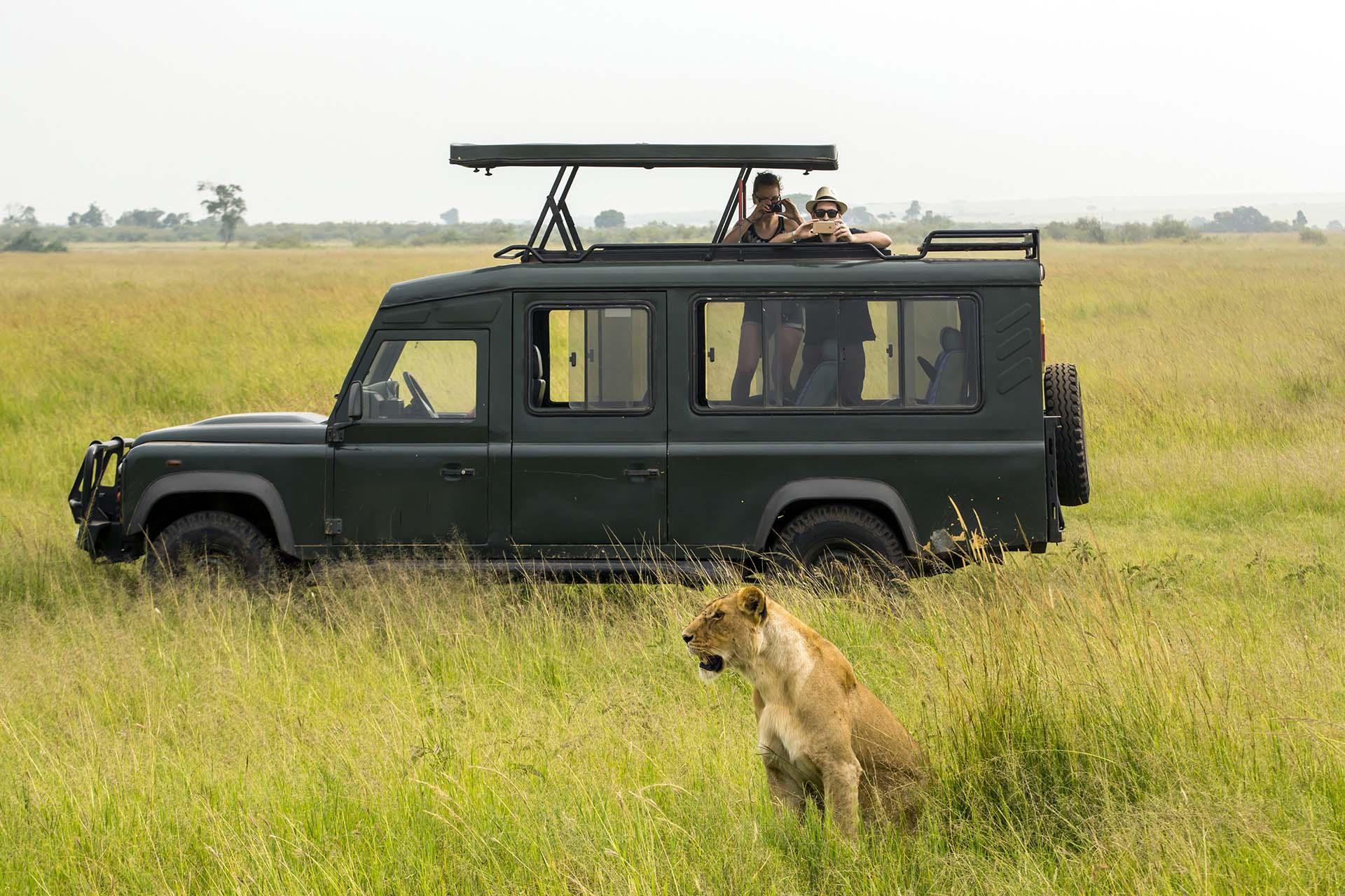 Los turistas observan a leones muy de cerca