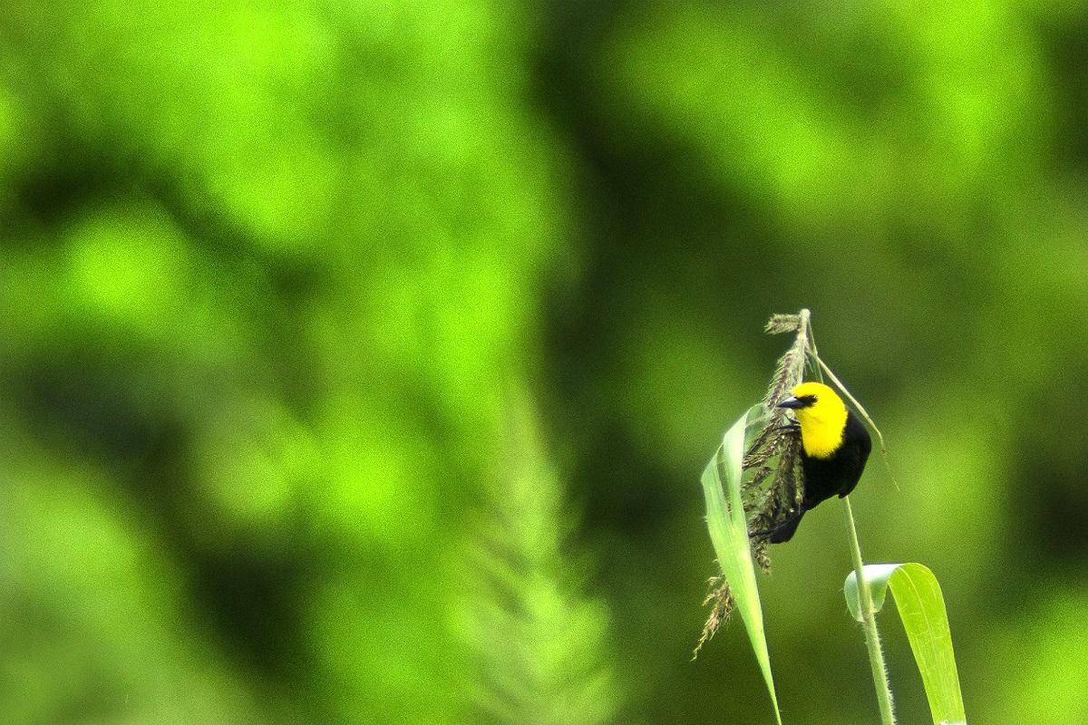 Aves en el amazonas