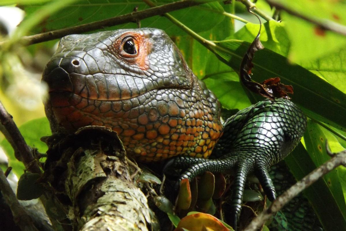 Navenado el Amazonas con La perla - Fauna