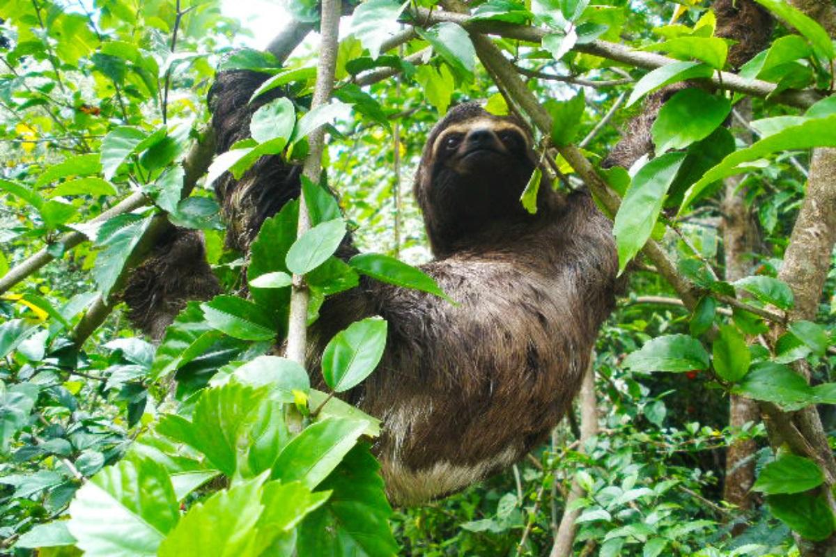 Navenado el Amazonas con La perla