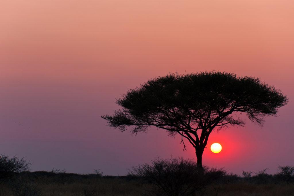 Parque Nacional de Etosha Namibia