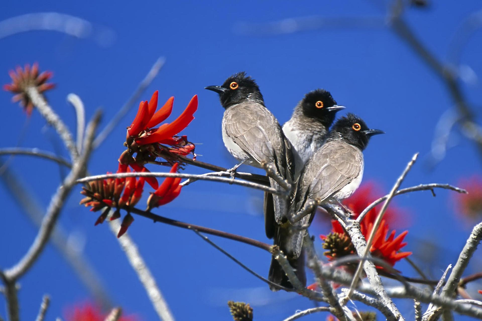 Tres pájaros del Parque Nacional de Etosha Namibia