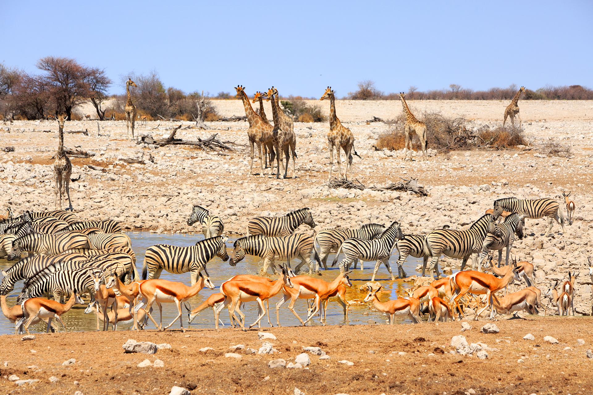 Pozo de agua Vibran en Etosha Namibia