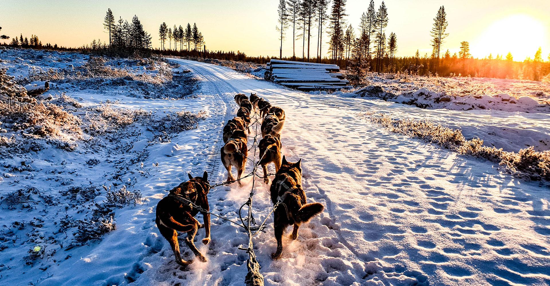 Trineo de perros en finlandia