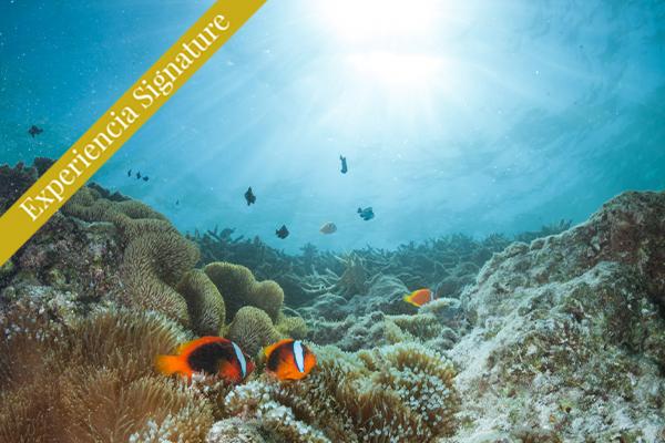 Gran Barrera de Coral Cairns Australia