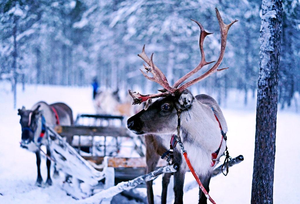 Ivalo Inari Finlandia