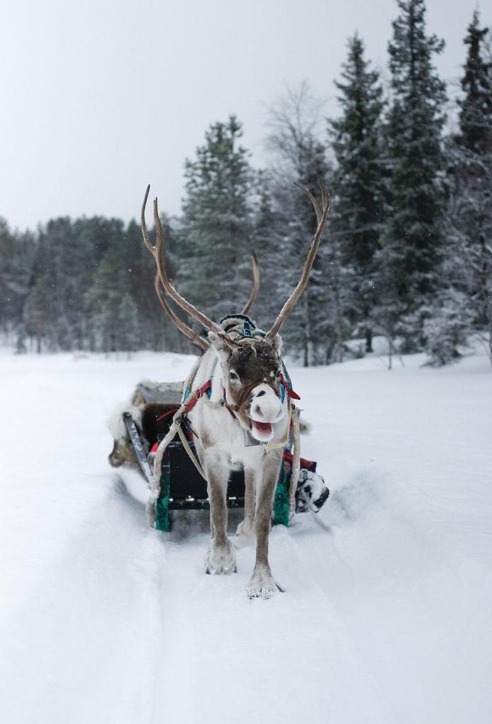 Laponia Kittila Finlandia