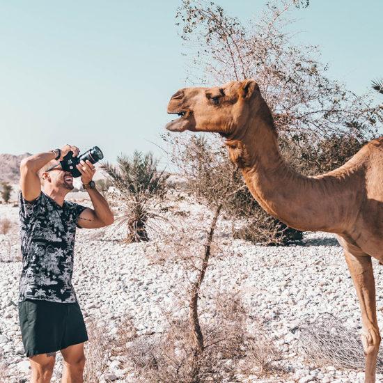 Fotografía de Camello en oman