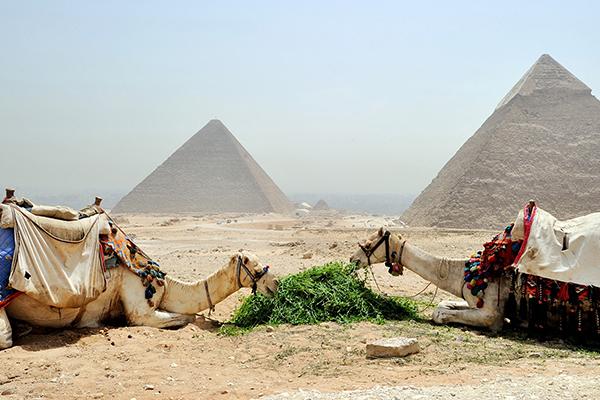 camellos-comiendo-al-final-las-piramides Grupal ASIVIAJO