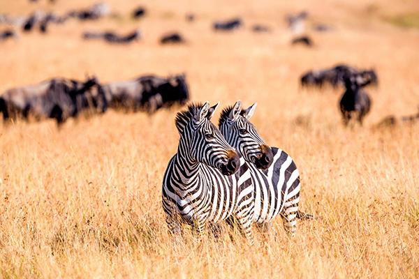 Continente de áfrica - Kenia - ASIVIAJO
