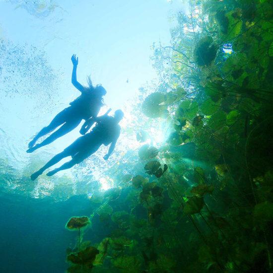 Experencia xenotes cenote Ha