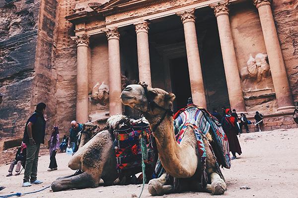 Camello en Petra Jordania ASIVIAJO