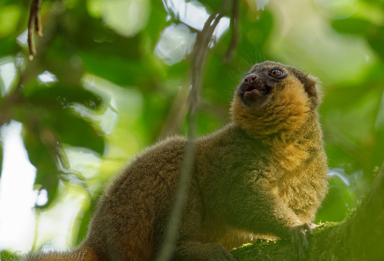 Experiencia en Madagascar