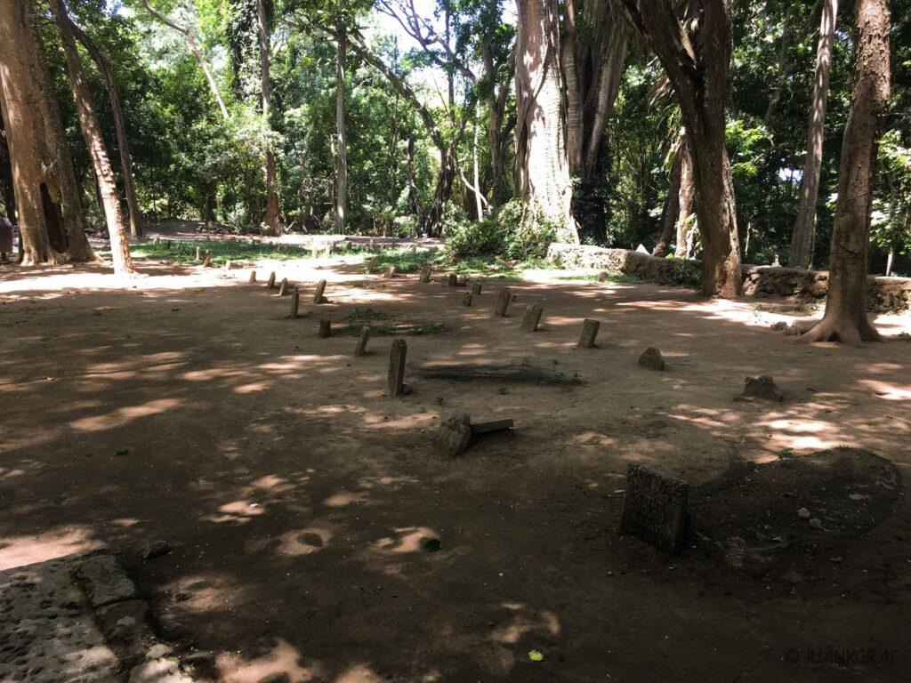 Cementerio monkey forest