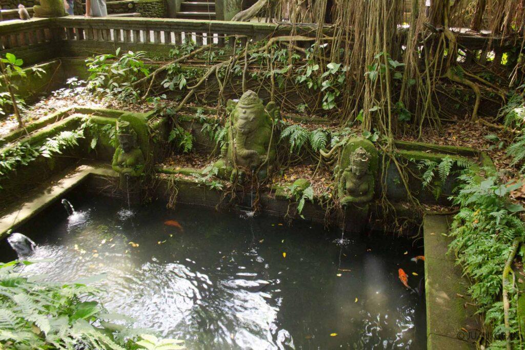 Estanque peces koi