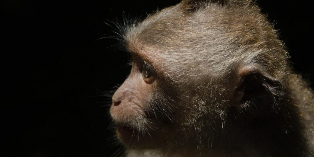 Mono en primer plano