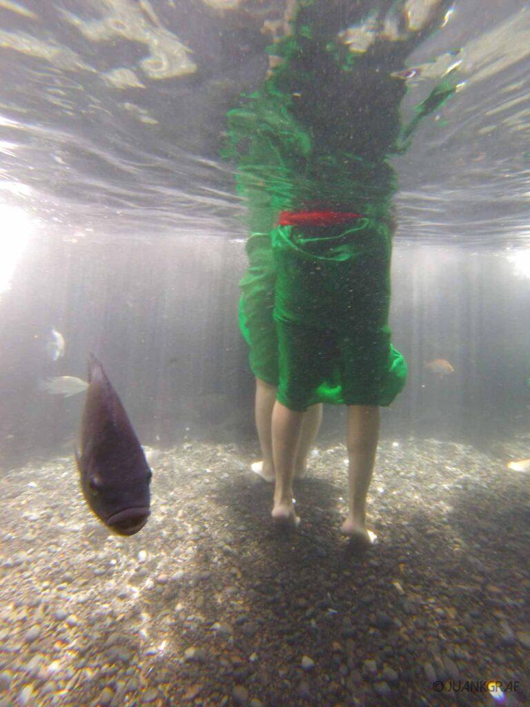 Pura trita empul fish