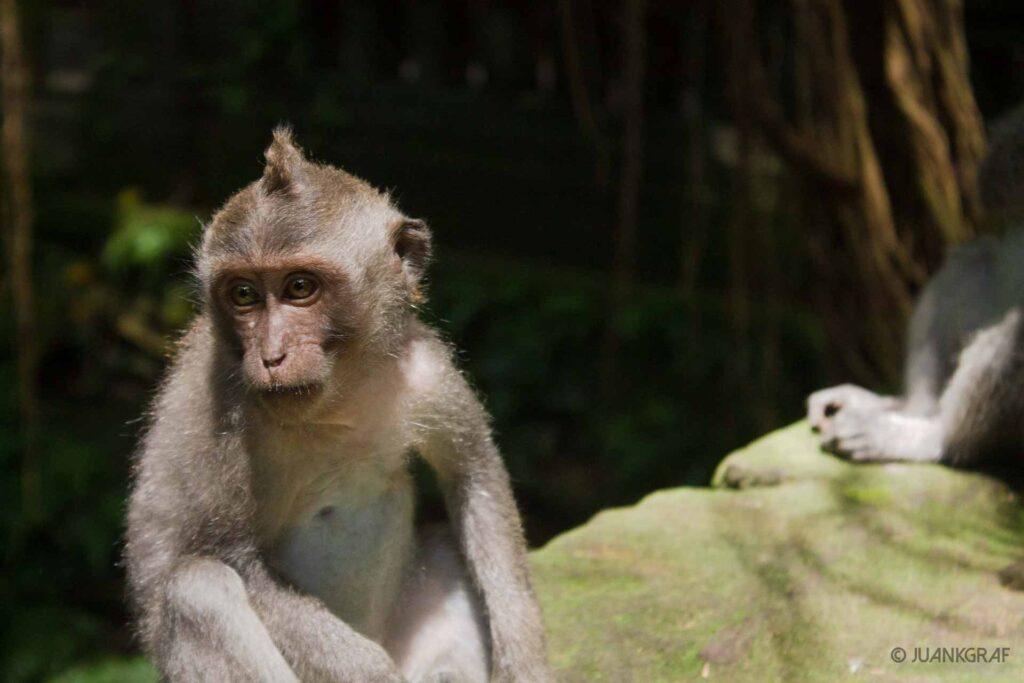 mono primer plano