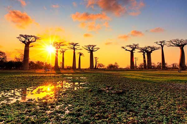 Baobabs al Atardecer MADAGASCAR ASIVIAJO