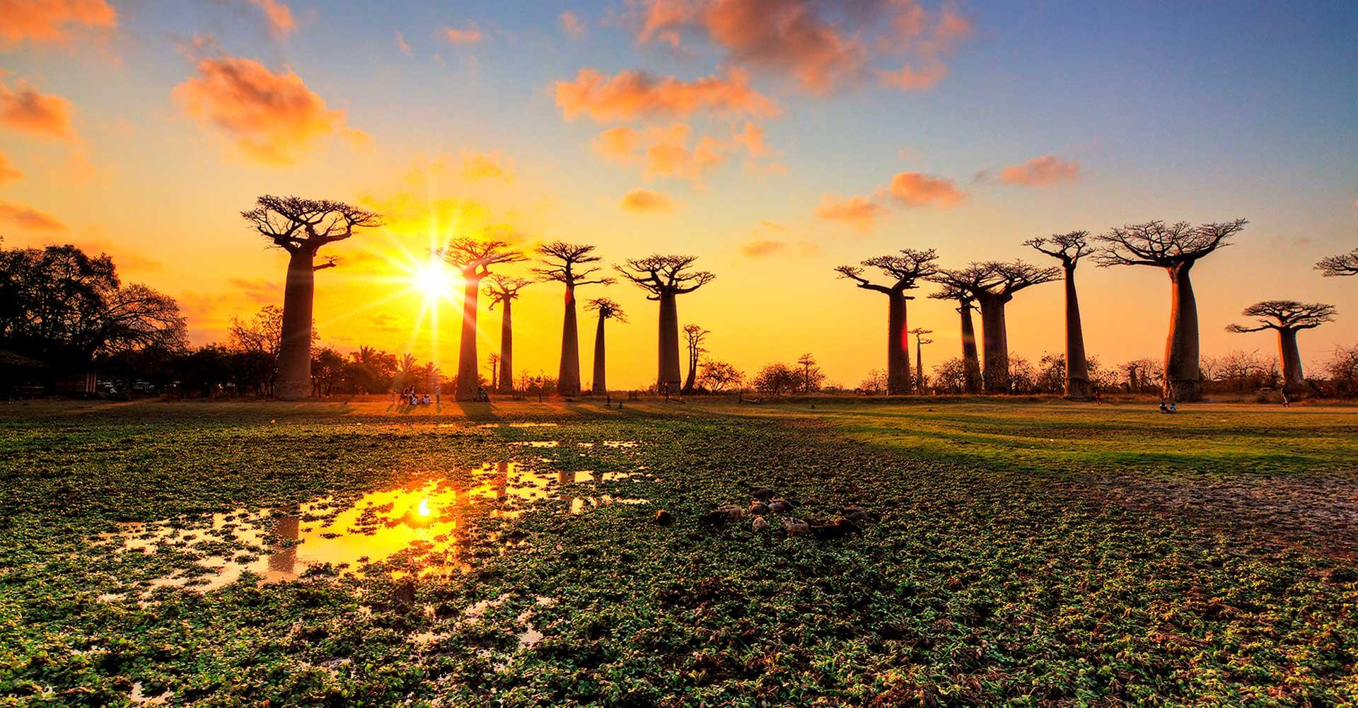 Baobabs al Atardecer MADAGASCAR