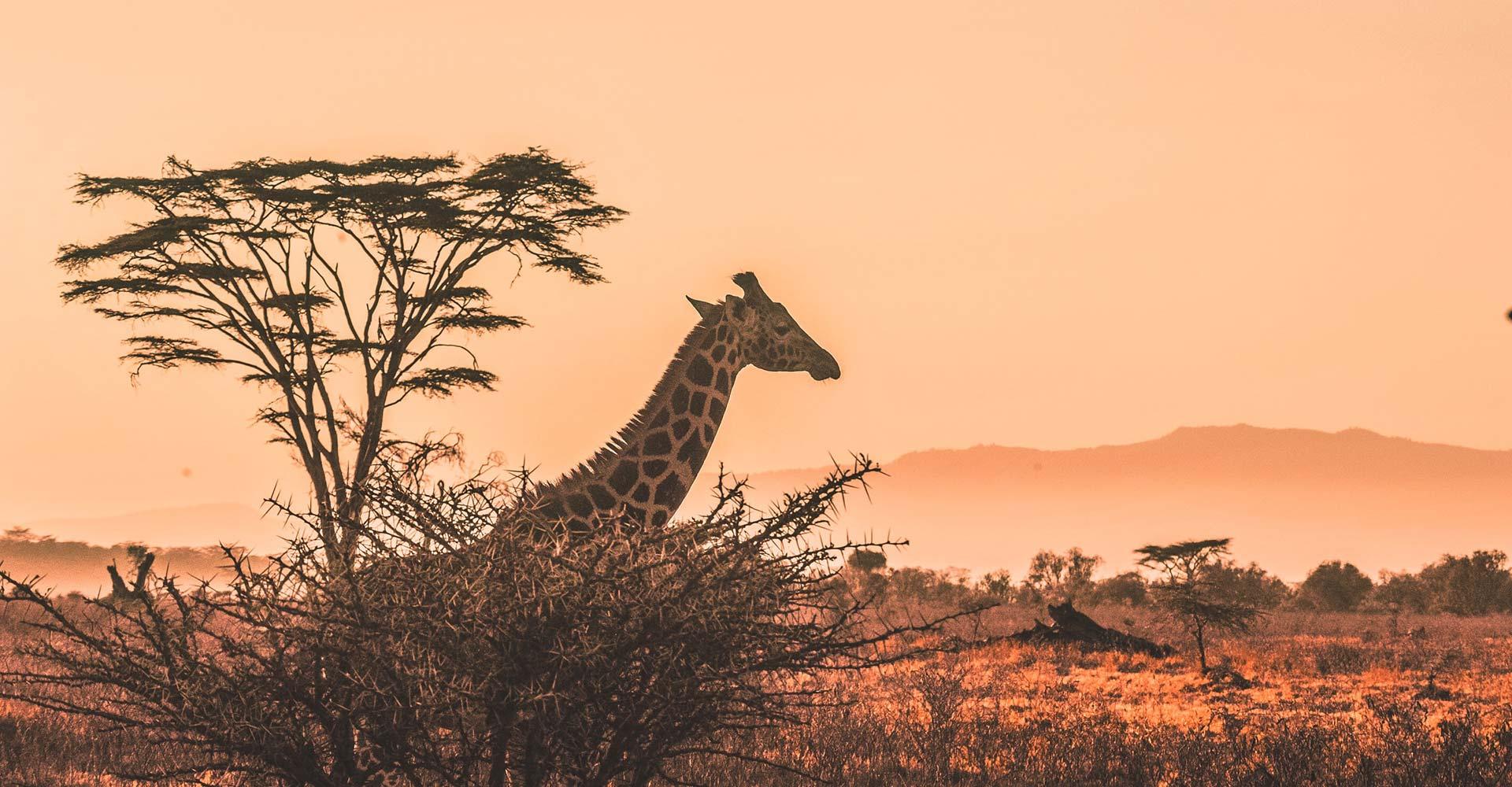 Experiencia a Kenia