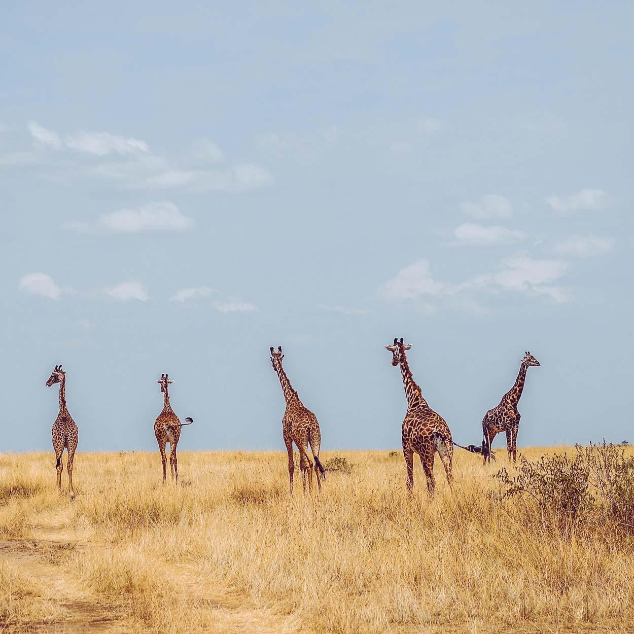 Reserva Nacional Masai Mara Kenia