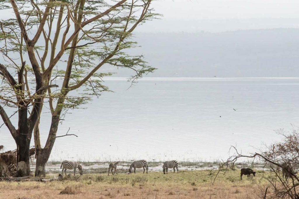 lago Nakuru en Kenia africa.